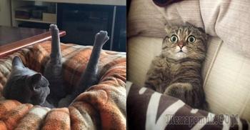 Забавные фото о том, каково это жить с котом