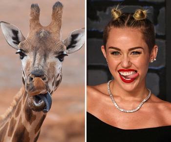 15 животных, которые выглядят как голливудские знаменитости