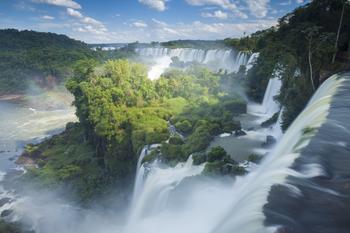 Красота лесов нашей Планеты