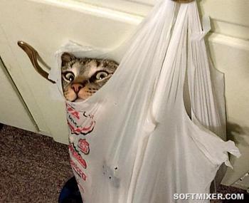 Кошки и страсть к пакетам