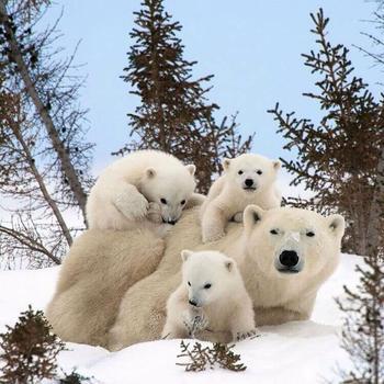 Несколько очаровательных семейных портретов животных