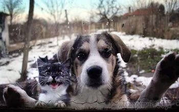 Фото животных, которых забыли пустить домой