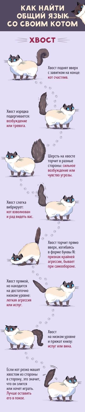 Как стать лучшим другом вашему коту
