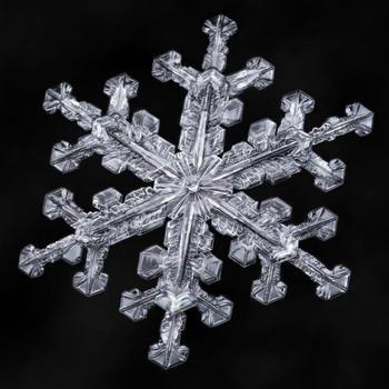 Снежинки под микроскопом: 14 великолепных зимних макрофотографий