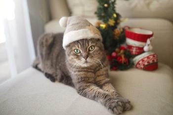 Смешные коты в колпачках из собственной шерсти