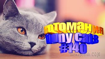 Смешные коты | Приколы с котами | Видео про котов | Котомания # 140
