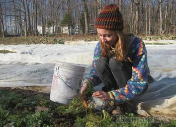 Посадка моркови под зиму — невероятно, но факт!