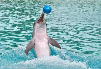 Как на самом деле животные попадают в дельфинарии