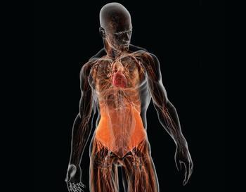 Сколько осталось вашему биологическому телу?