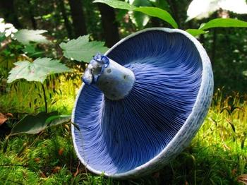 25 самых необычных грибов