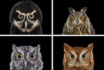 Хранители мудрости: мистическая красота сов