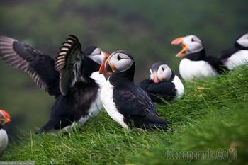 Фареры: остров птиц. Фотопрогулка