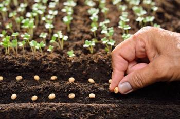 Как рассчитать срок прорастания семян