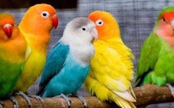Как выбрать попугая, и какими они бывают
