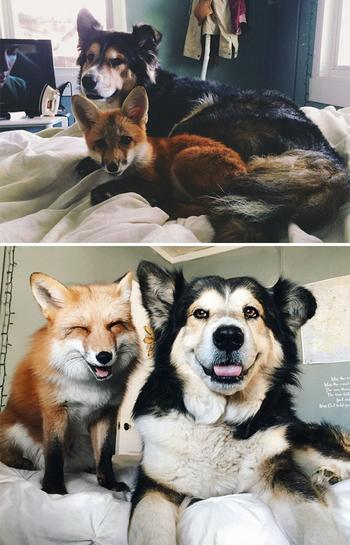 30 фото «До и После» животных, которые выросли вместе