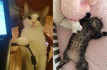Кошки - хозяева в доме