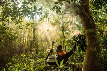Лучшие снимки лесов с конкурса Mangrove Photography Awards 2021