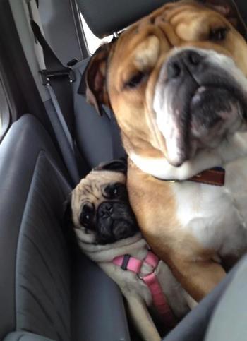 20 собак, которые понятия не имеют о границах личного пространства