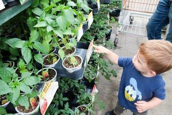 7 признаков некачественной рассады, или Какую рассаду лучше не покупать