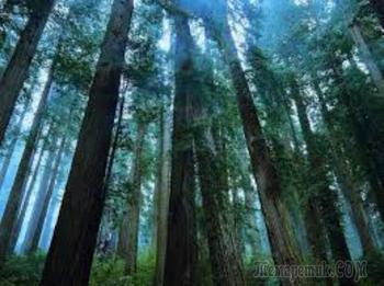 Быль лесную сплету..