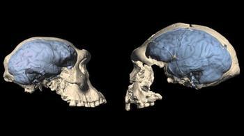 Насколько умны были наши предки — древние люди?