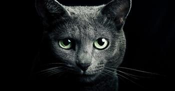 Почему кошки приходят в наш дом
