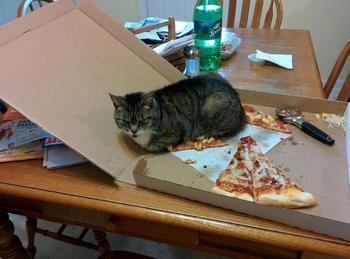 25 смешных фотографий доказывающих, что кошки ещё те негодяи