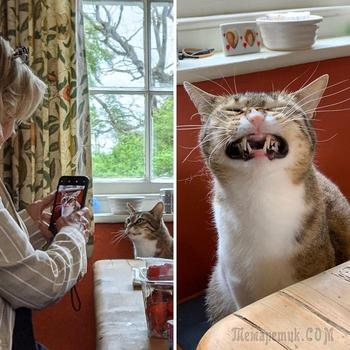 20 смешных кошек, глядя на которых кажется, что они делают всё, чтобы люди посмеялись