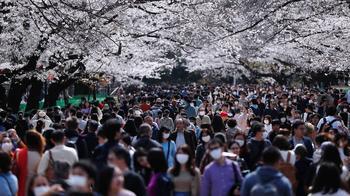 Сакура и вирус Как Япония не удержала режим
