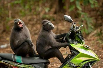Финалисты конкурса самых смешных фотографий диких животных «Comedy Wildlife Photography Awards 2017»