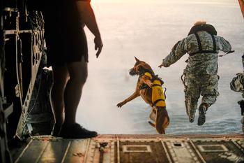 Фотопроект: Собаки на работе