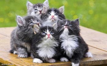 Кошкины дети