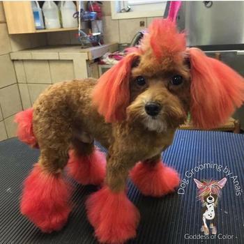 Грумер превращает собак в мистических существ при помощи краски и это не всем по нраву