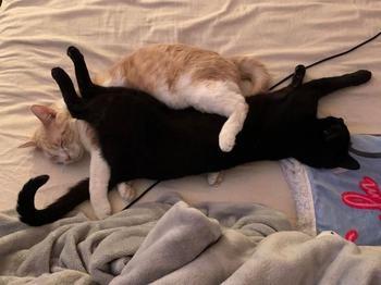 17 кошачьих пар