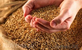 Украина уже исчерпала годовые квоты на поставки пшеницы в ЕС