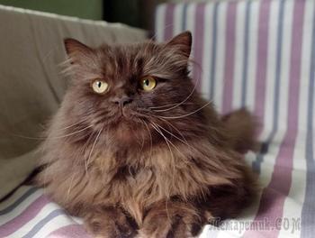Кошачий пух и с чем его едят. Часть вторая