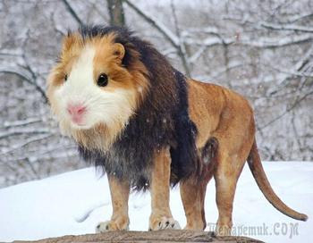 Художник создает новые виды животных с помощью фотошопа и результат удивительно смешной