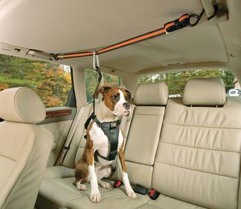 Подвижный груз — как правильно перевозить домашних животных