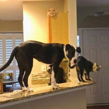 Пёс, который возомнил себя кошкой
