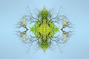 Абстрактная красота природы в композициях биолога-фотографа из Бельгии