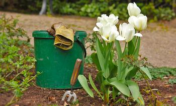 Как сажать тюльпаны весной