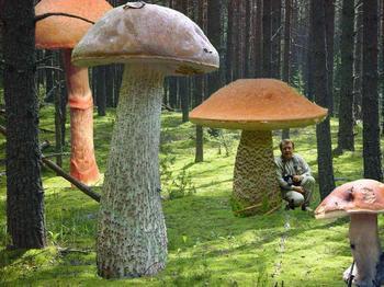 Самый большой гриб в мире как приз любителям тихой охоты