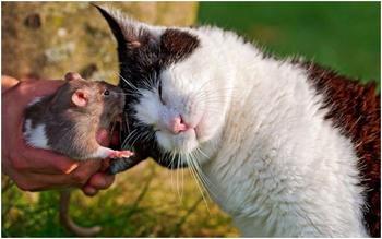 Невероятные факты из жизни мышей