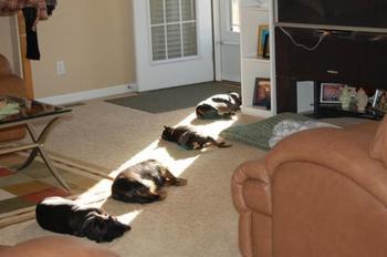 Милейшие домашние питомцы в поисках тепла