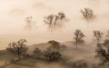 Сквозь туман