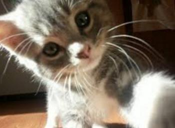 Кошачьи селфи
