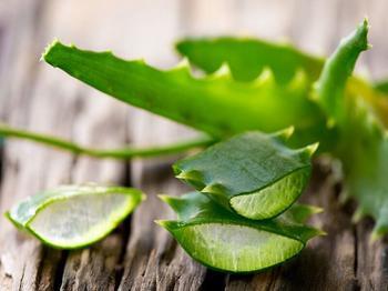 Как сохранить лечебные свойства геля алоэ вера