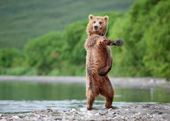 Танцевальные навыки этих животных заставят вас нервно курить в стороне