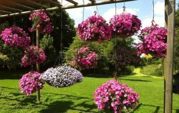 Подвесной сад: 6 практических советов по реализации