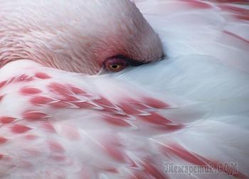Интереснейшие факты о фламинго — одном из древнейших видов птиц